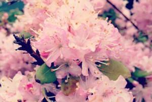 Spring Break @ CWA